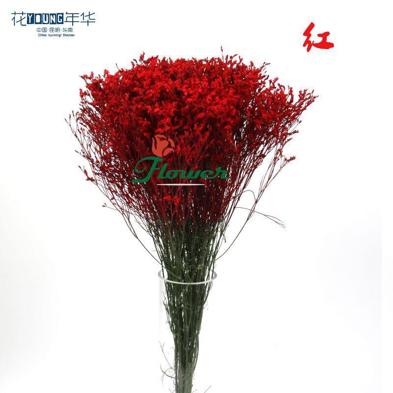 红色水晶草