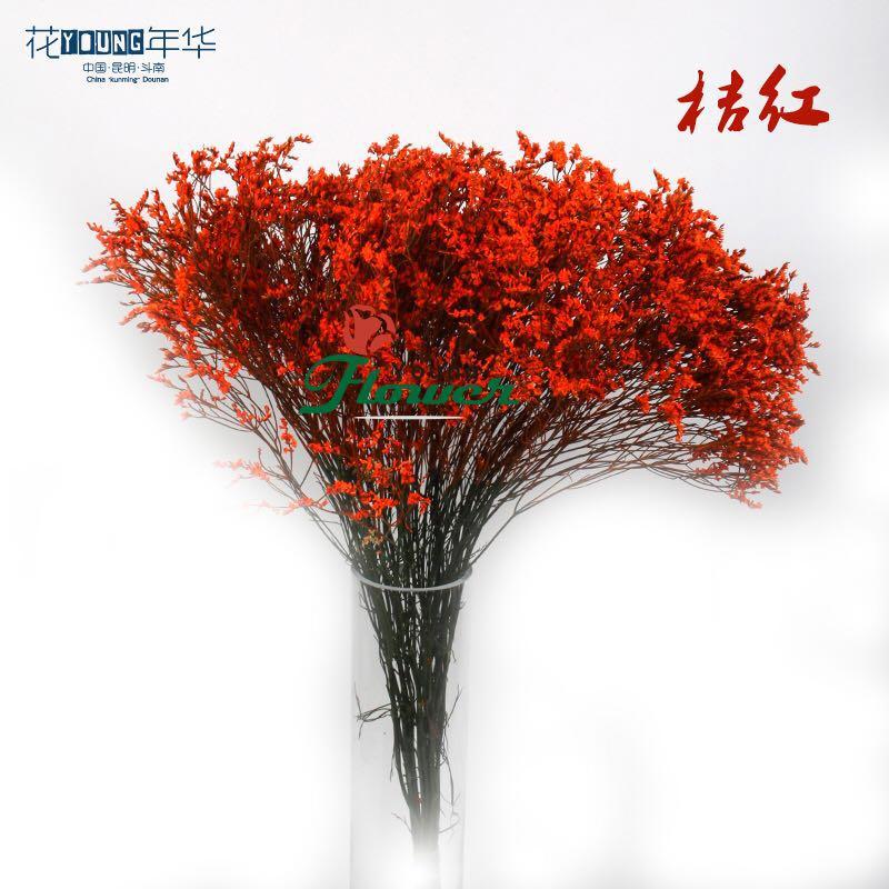 桔红水晶草