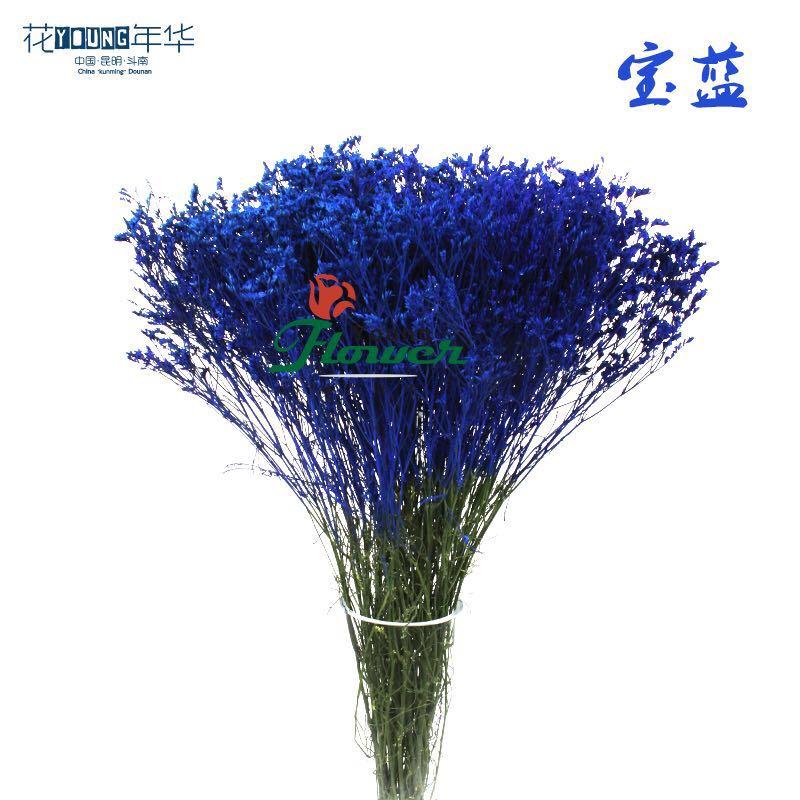 宝蓝水晶草