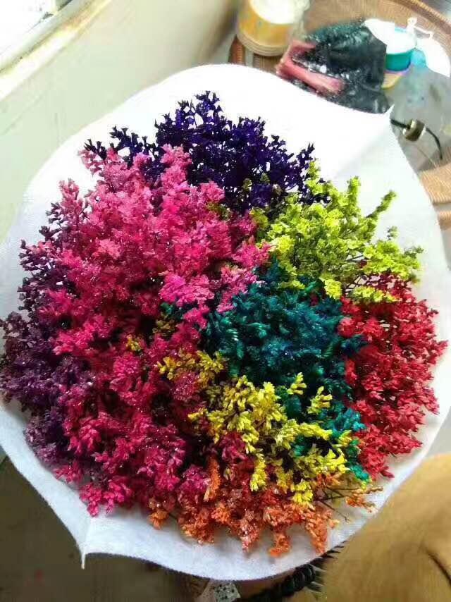 七彩水晶草