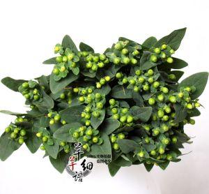 绿色火龙珠