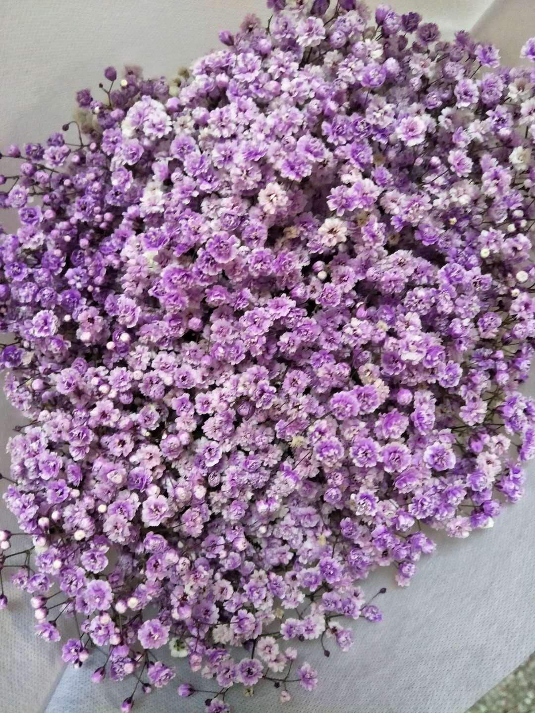 浅紫千万星