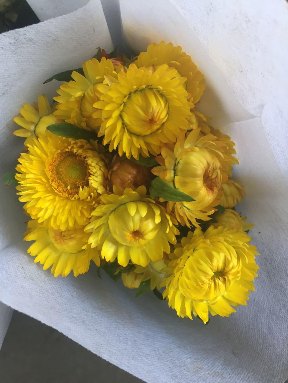麦秆菊黄色