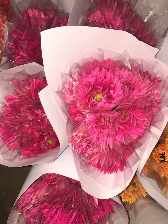 紫拉丝非洲菊