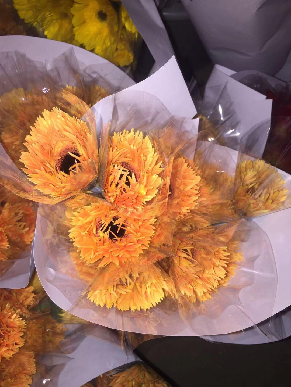 橙拉丝非洲菊